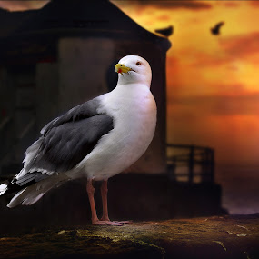 The proud Seagull by Sarah Laurel - Animals Birds