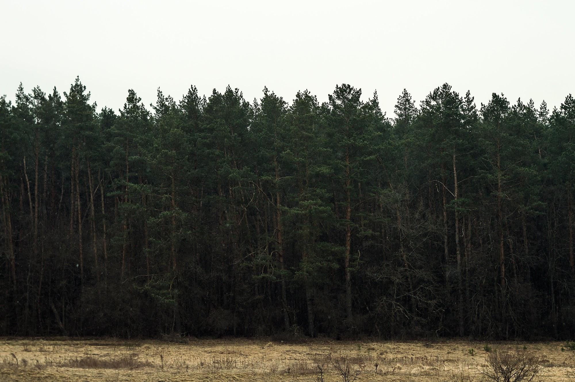 Ліс за річкою Тетерів