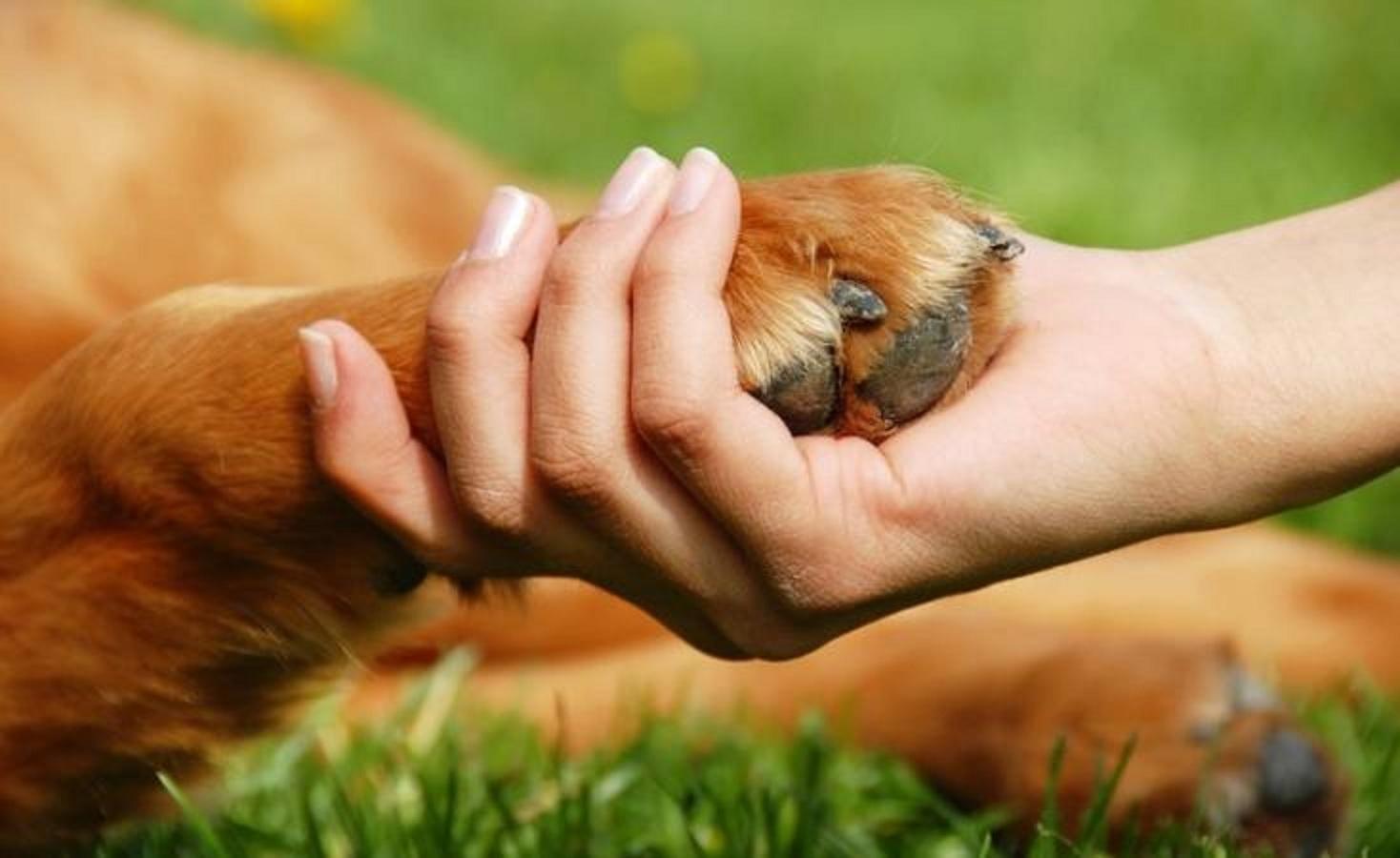 Тільки ми можемо допомогти тваринам, щоб у них були права.