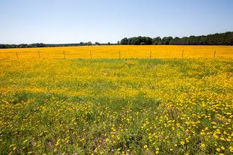 Photo: a sea of wildflowers