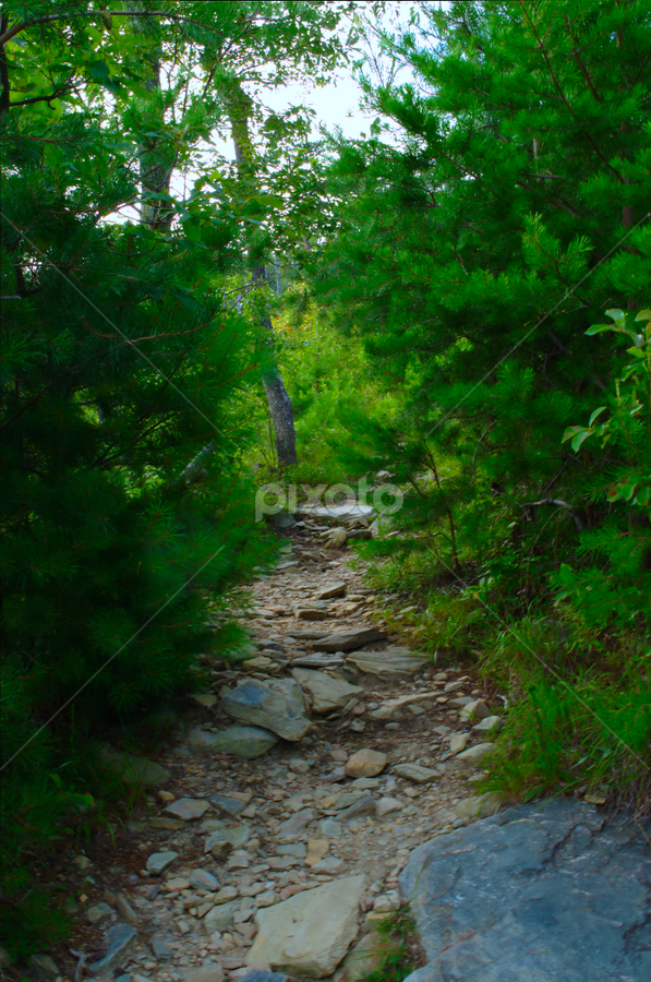 by Jeff Moore - Landscapes Forests ( peaceful, nature, trail, path, stone, hiking, hike )