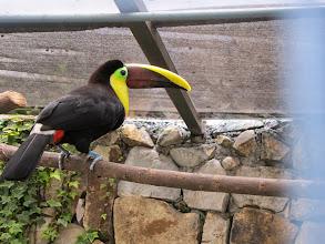 Photo: Toucan