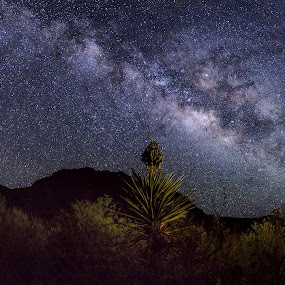 Big Bend Sky by Jim O'Neill - Landscapes Starscapes ( led lighting, big bend, starscapes, national parks, big bend national park, night sky, milky way )