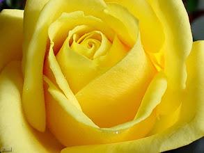 Fotografija: terapia yellow 09