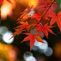Autumn Wallpaper icon