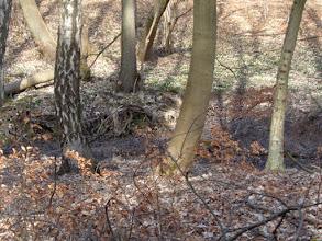 Photo: Strumyk, który przepływa przez środek Jaru i stwarza śnieżycy warunki do życia, był w tym roku skąpy.