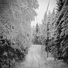 Photo: A Snowy Road through the Woods #monochromephotography for #monochromemonday +Monochrome Mondayby +Steve Barge+Nurcan Azaz+Jerry Johnson+Charles Lupica+Hans Berendsen