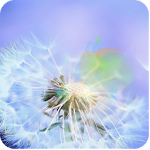 dandelion fly to the sun Icon