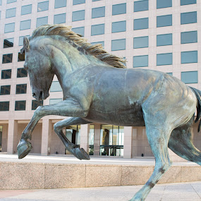Mustangs of Las Colinas Statue by Gwyn Goodrow - Buildings & Architecture Statues & Monuments ( gallop, urban, mustang, statue, horse )