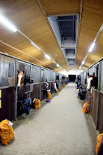 Photo: Möhren-Geschenke für die Pferde