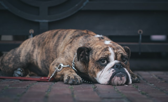 How can you tell if your pet has worms?