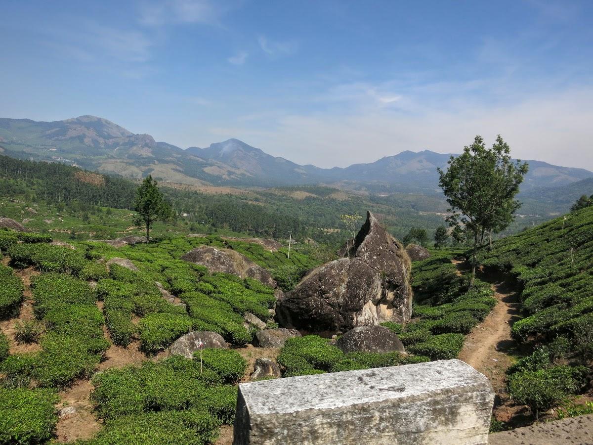 India. Kerala Motorbike Road Trip. Tea gardens from Munnar to Thekkady