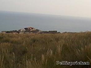 Photo: Ännu mera gyllene gräs med havet i bakgrunden