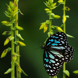 The butterfly by Bhavesh Patel - Animals Insects & Spiders ( nature, butterfly, plant, insect, colorful )