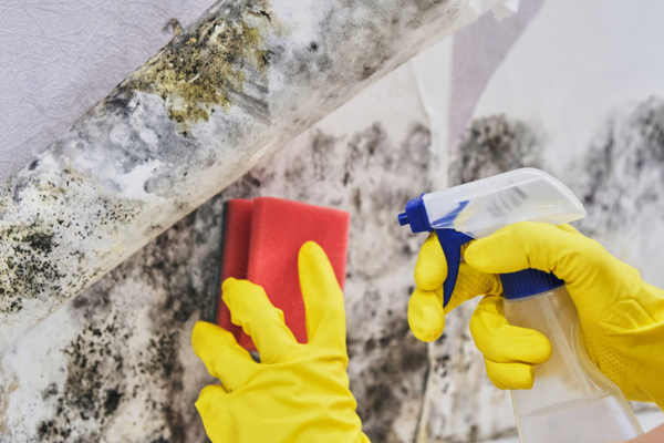 scrubbing mould for removal