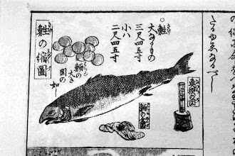 Photo: Whole north Circum-Pacific had a strong salmon orientation and a long fishing tradition stretching back thousands of years http://www.anthro.fsu.edu/pdf/Erlandson_2008.pdf  Dog salmon illustrated at Niigata Prefecture, AD 1840 during the Edo Period.