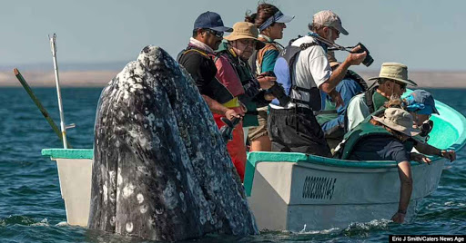 Hilarious Moment Sneaky Whale Shows Up Behind Sightseers As They Look The Wrong Way