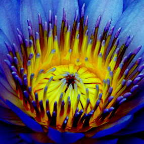 The Great Lotus by Joe Halim - Nature Up Close Flowers - 2011-2013