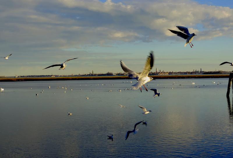 La laguna veneta  di renzo brazzolotto