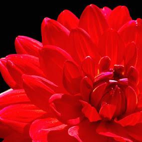 by Megan Richardson - Nature Up Close Flowers - 2011-2013