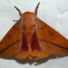 Honey Locust Moth