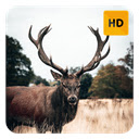 Deer Wallpaper HD New Tab Theme© Icon