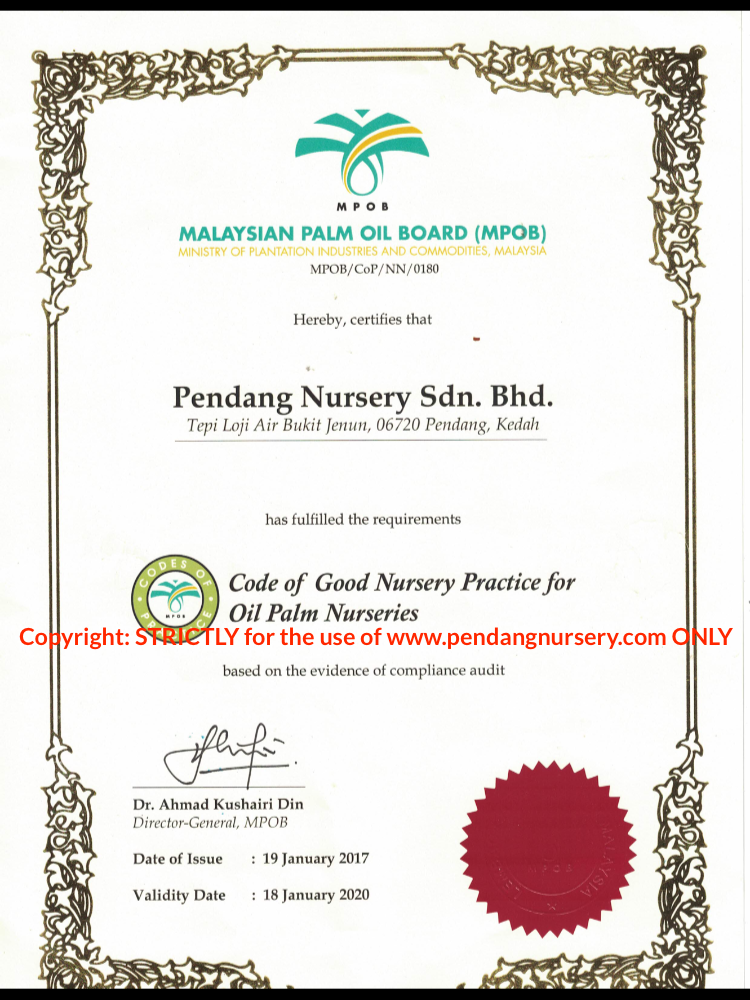 Pendang Nursery Sdn. Bhd. Palm Oil Seedlings Trade License
