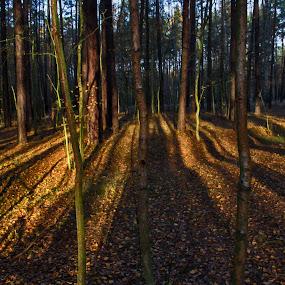 Forest by Jiří Valíček - Nature Up Close Other Natural Objects ( morning, woods, shadows,  )