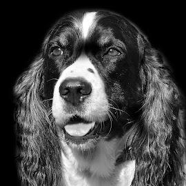 by Michelle Hunt - Black & White Animals