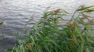 Photo: Grass by the lake.