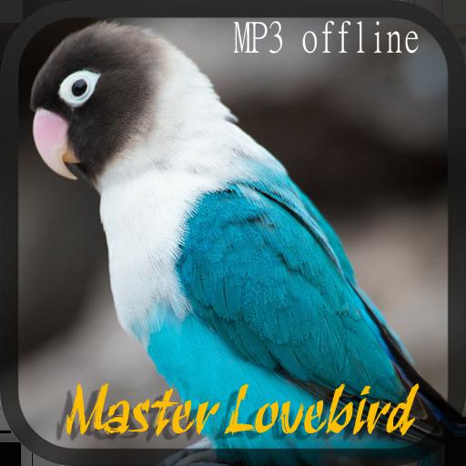 Master Lovebird