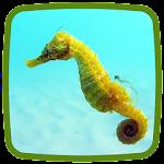 Seahorse Live Wallpaper Icon