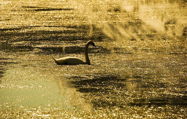 sul lago dorato di artu