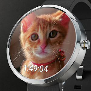 download Cute Cats Watchface apk