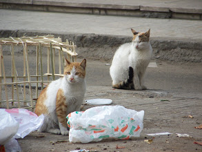 Photo: The cats like playing in the trash.