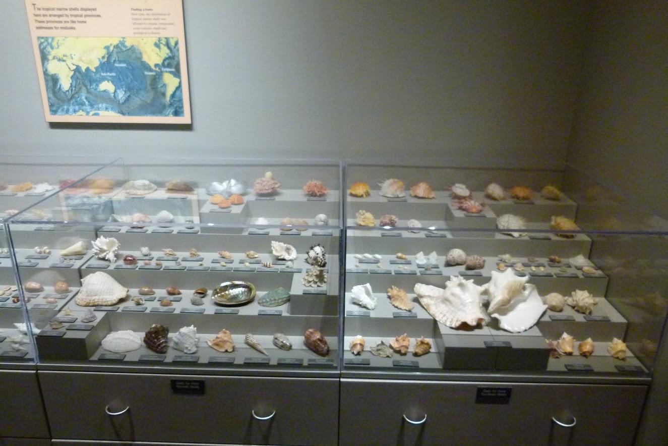 Lyman Museum