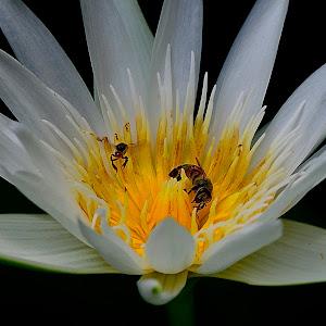 Jul 9 lotus.jpg