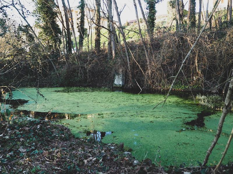 Verde  di Giorgiacassano