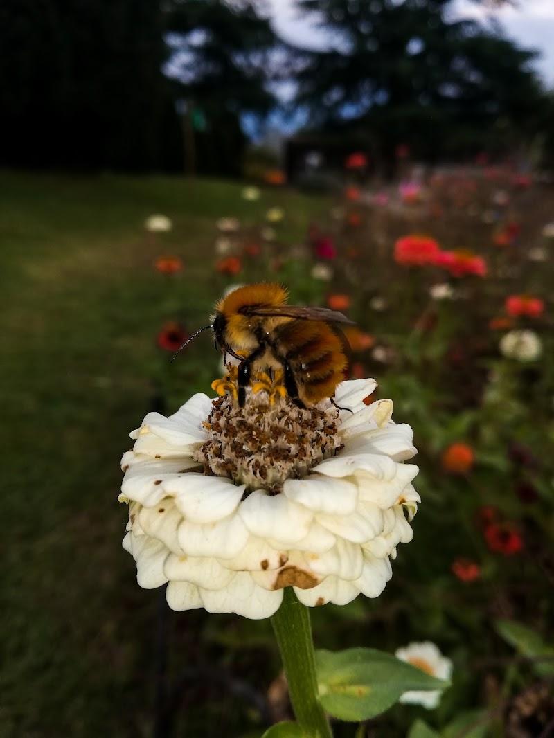 ape su fiore  di Alice_22