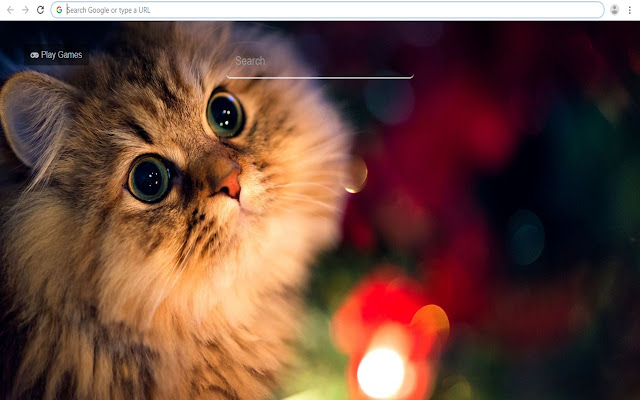 Hd Cats Wallpapers