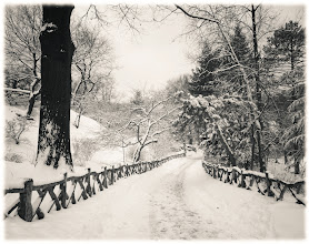 """Photo: """"Ghost shiver...""""  New York Photography: Central Park Winter Path.  I think back to days spent wrapped in the cold silence of freshly fallen snow in Central Park. The labyrinth-like path leading from Shakespeare's Garden lined by a wooden fence twists and turns in the snow winding its way under trees whose branches reach out to each other like eager arms awaiting the warmth of an embrace.  It's on days like this when the sun rests longer than usual and winter's essence seeps through every crack and crevice that the earth quivers a ghost shiver that rests in summer's memory.  —-  As requested, here is the link to the master post about my photography on various posters, prints, cards, calendars and a wide variety of items/gifts: http://goo.gl/nJiKc.   View this post if you wish at my site here:  http://nythroughthelens.com/post/14032004753/central-park-winter-path-new-york-city-i-think    Tags: #photography #writing #prose #newyorkcity #centralpark #winter #snow #landscape #newyorkcityphotography #centralparkwinter #centralparksnow #winterlandscape"""