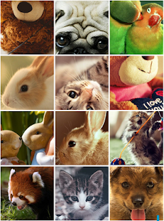 Cute Animals Wallpapers - náhled