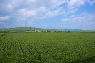 Photo: 北竜町の彩どり・8月の3