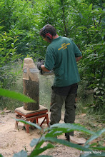 Photo: Catts Wood - volunteers from Woodland Products using some of the coppiced wood to make Chainsaw Sculptures