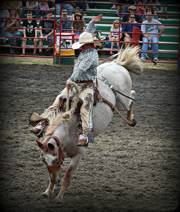 Hang on , this is going to be a bumpy ride.' by Valerie Stein - Sports & Fitness Rodeo/Bull Riding