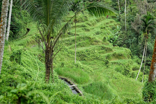 Indonesia. Bali Tegalalang Rice Terraces Banner. Subak Irrigation System