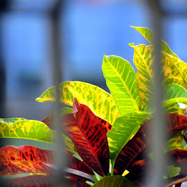 by Shatoddruh Saha - Nature Up Close Leaves & Grasses ( #nikonphotography, #vivid, #manualfocus, #colourful, #leaves )