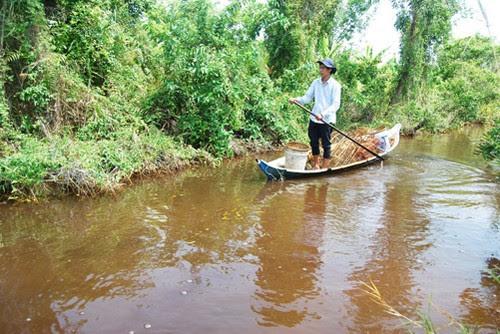 Mùa mưa về vườn quốc gia U Minh Hạ đặt lờ bắt cá 2