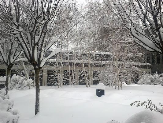 winter in the yard di Mav
