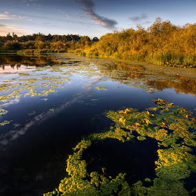 Pond Life by Don Guindon - Landscapes Waterscapes ( victoria bc, sunset, lake, swan lake, pond, dock )